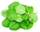 Baby spinach leaves — Stock Photo