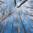 Stock Photo: Treetop in winter