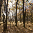 Stock Photo: The autumn forest