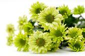 Chrysanthemum bouquet — Stock Photo