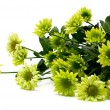 Chrysanthemum bouquet — Stock Photo