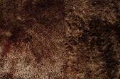 Close-up of brown fur — Stock Photo