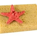 Sponge — Stock Photo