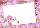 贺卡的兰花 — 图库照片