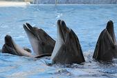 Golfinhos — Fotografia Stock