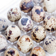 Quail eggs in plastic container — Stock Photo