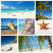 Caribbean nature collage — Stock Photo