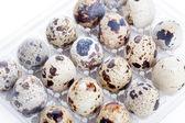 Quail eggs in plastic container — Stock Photo