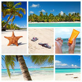 Tropical nature collage — Stock Photo