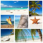 Collage di natura caraibica — Foto Stock