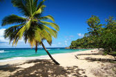 Palm on caribbean sea beach — Stock Photo