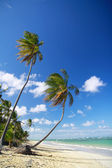 Two palms on caribbean beach — Stock Photo