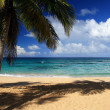 Palm on beautiful caribbean beach - Stock Photo