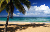 Palm on beautiful caribbean beach — Stock Photo