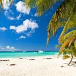 Caribbean paradise — Stock Photo #9707039