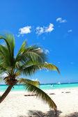 Tropischer strand mit palmen — Stockfoto