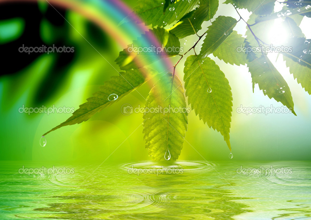 Green branch reflected in water and a rainbow — Stock Photo #7980721