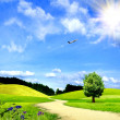 Green grass and the blue sky — Foto de Stock
