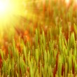 Green grass — Stockfoto #9850416