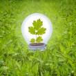 Light bulb in grass. Concept of green energy. — Stock Photo