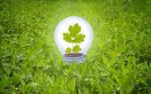 Foco en hierba. concepto de la energía verde. — Foto de Stock