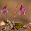 Beautiful flowers - Stockfoto