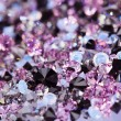 Small purple gem stones, luxury background shallow depth of fiel — Stock Photo #7979203