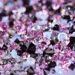 Small purple gem stones, luxury background shallow depth of fiel - Stock Photo