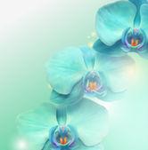 Sfondo vettoriale fiore orchidea — Vettoriale Stock