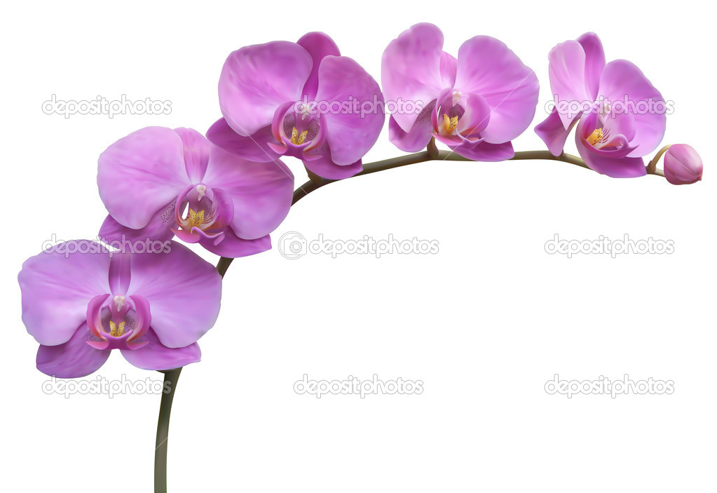 Flower Orchid vector frame background — Stock Vector #7971648