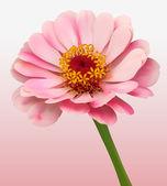Flower Bloom Background — Stock Vector
