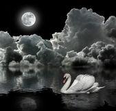 Weißer schwan in der nacht unter dem mond — Stockfoto