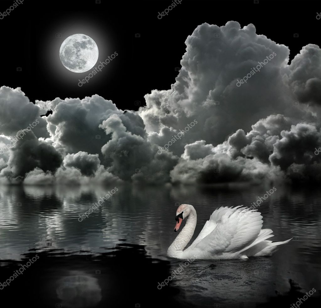White swan at night under the moon — Stock Photo #10558806