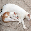 Cat and kitten it is sweet sleep — 图库照片