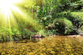 River in jungle, Thailand — Stock Photo