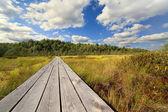 Carretera de madera a través de un pantano, bielorrusia — Foto de Stock