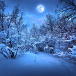 Moonlight night in winter wood — 图库照片