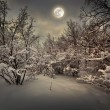 Moonlight night in winter wood — Stock Photo