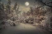 Moonlight natt i vinter trä — Stockfoto