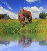The horse is grazed on the bank of lake — Stock Photo