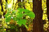 зеленая ветвь в парке — Стоковое фото