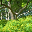 Yellow flowers and branchy tree - Stock Photo