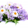 Lilac and daisy — Stock Photo