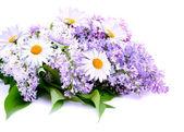 Lila a daisy — Stock fotografie