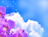Orchid and clouds — Stock Photo