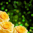 Stock Photo: Yellow roses