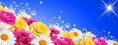 Цветы баннер — Стоковое фото