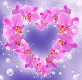 Orchid och bubblor — Stockfoto