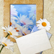 Grunge frame with daisy and paper - Stock Photo
