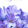 Blue Hyacinth — Stock Photo #10522249